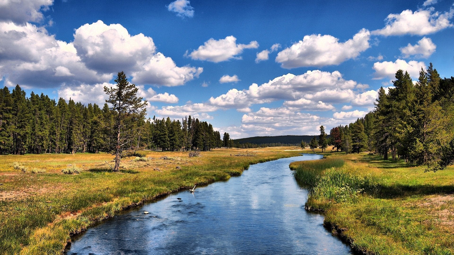Yellowstone: Brink of Disaster