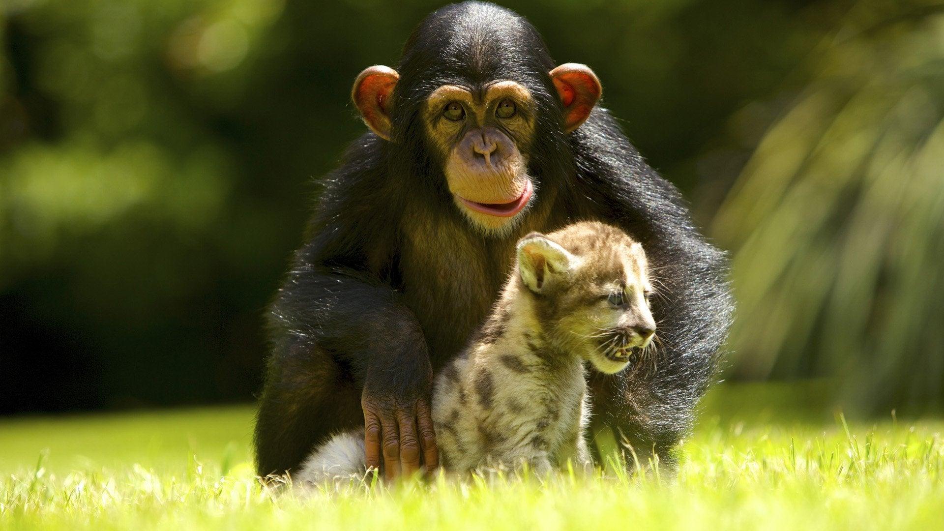 The World's Oddest Animal Couples