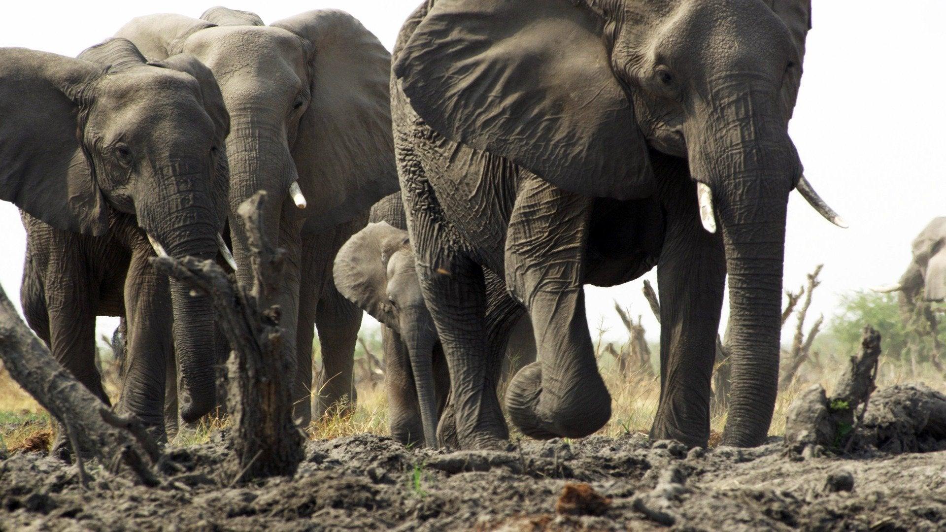 Clash of Africa's Giants