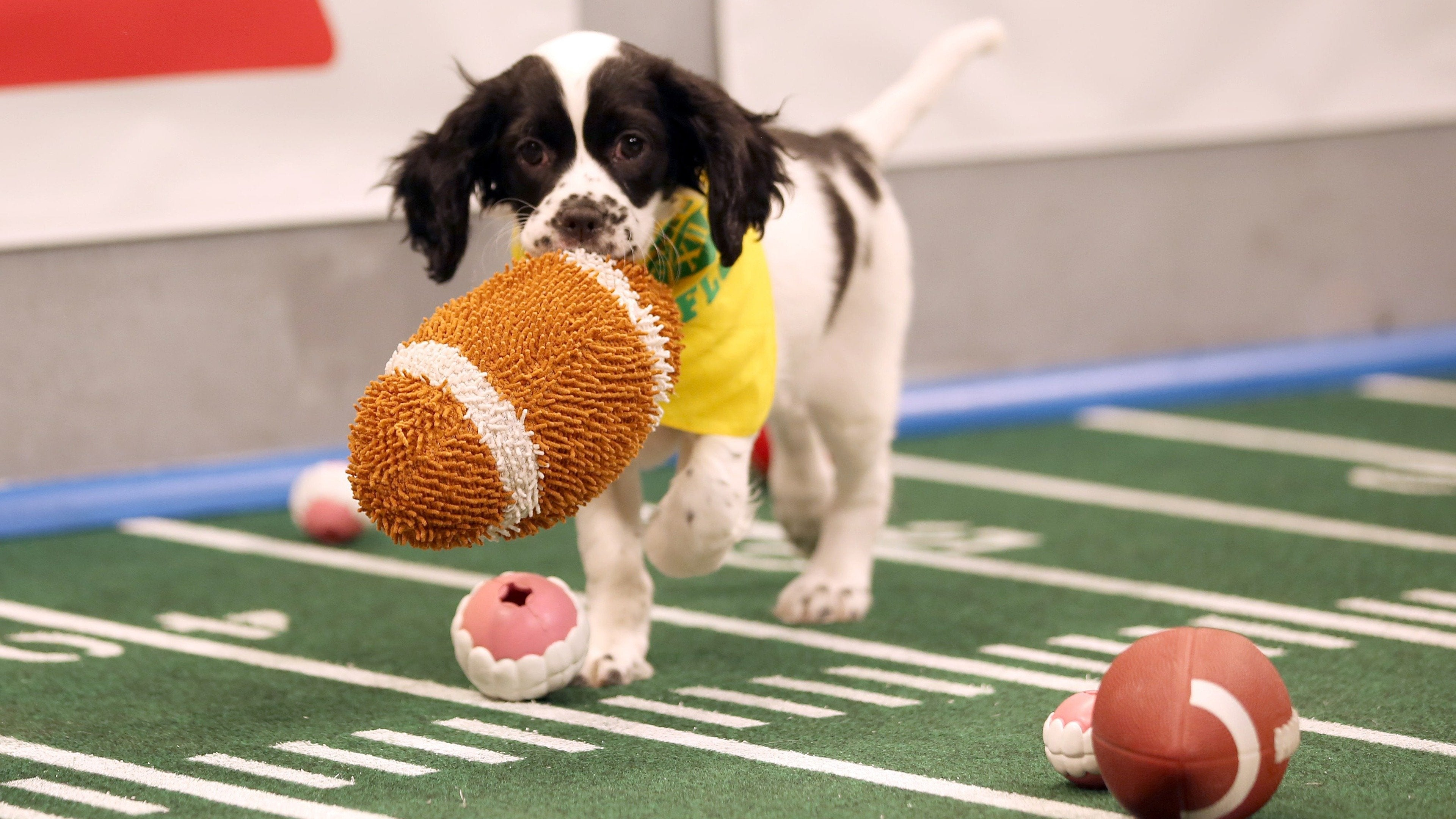 Puppy Bowl: Best of Inside the Bowl