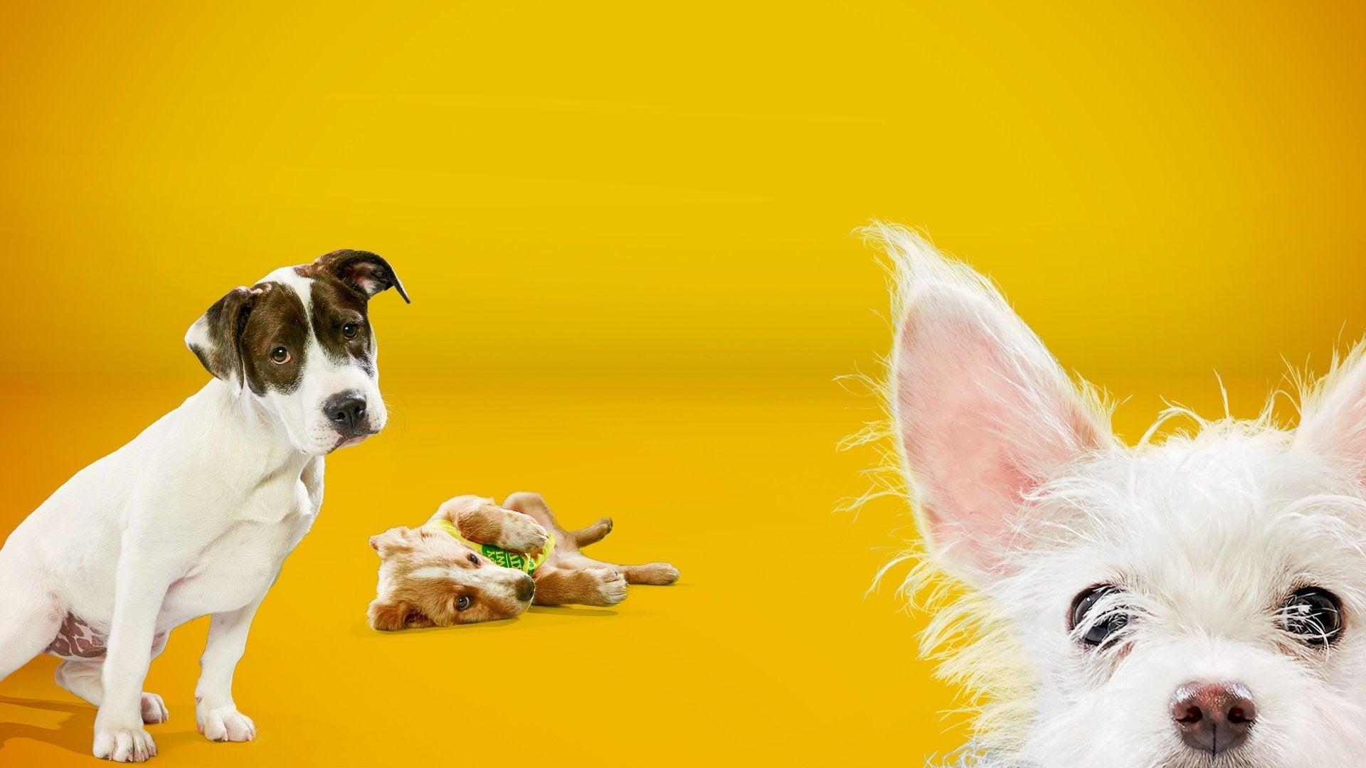 Puppy Bowl XIV Presents
