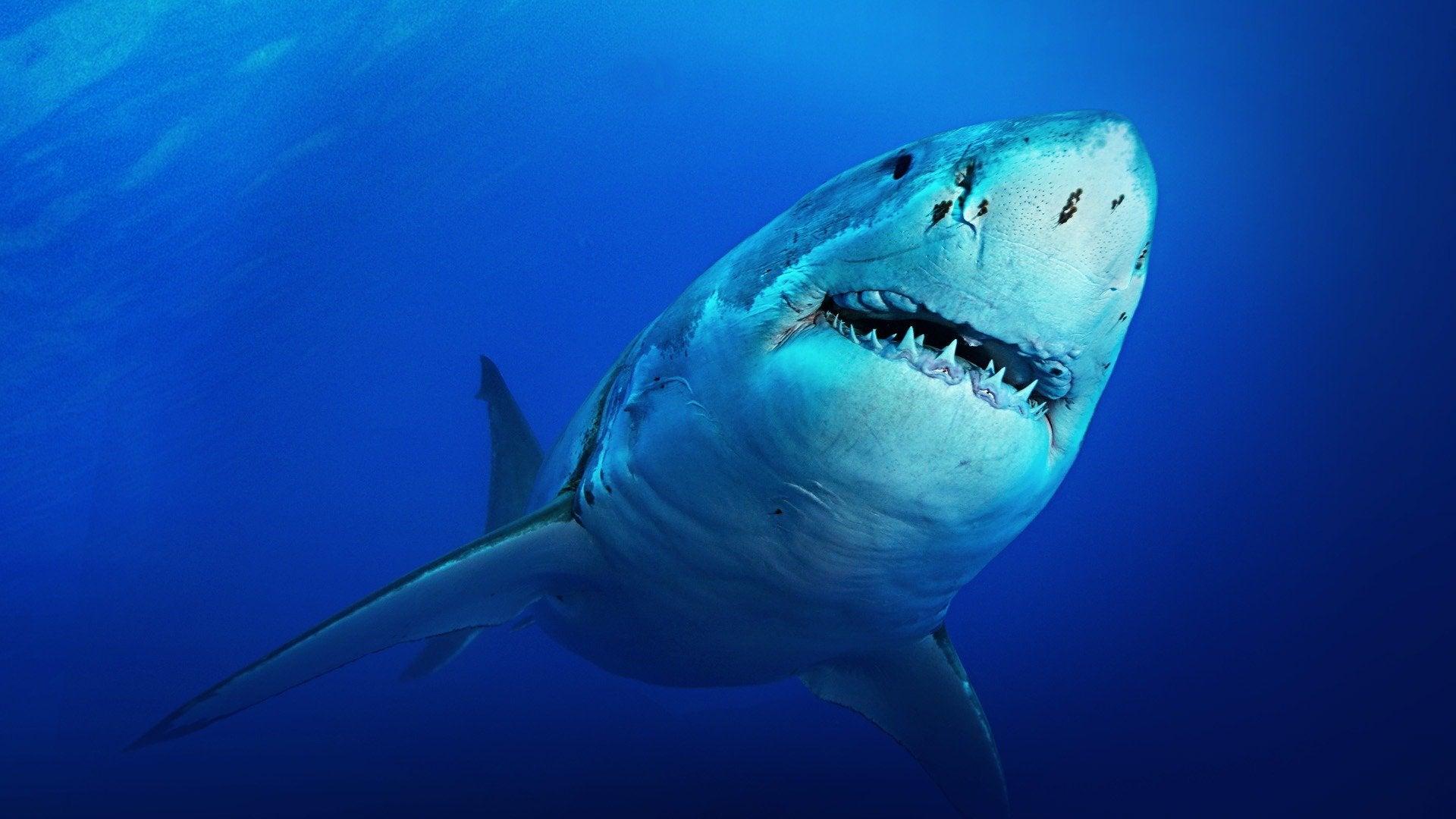 Shark Week's Isle of Jaws