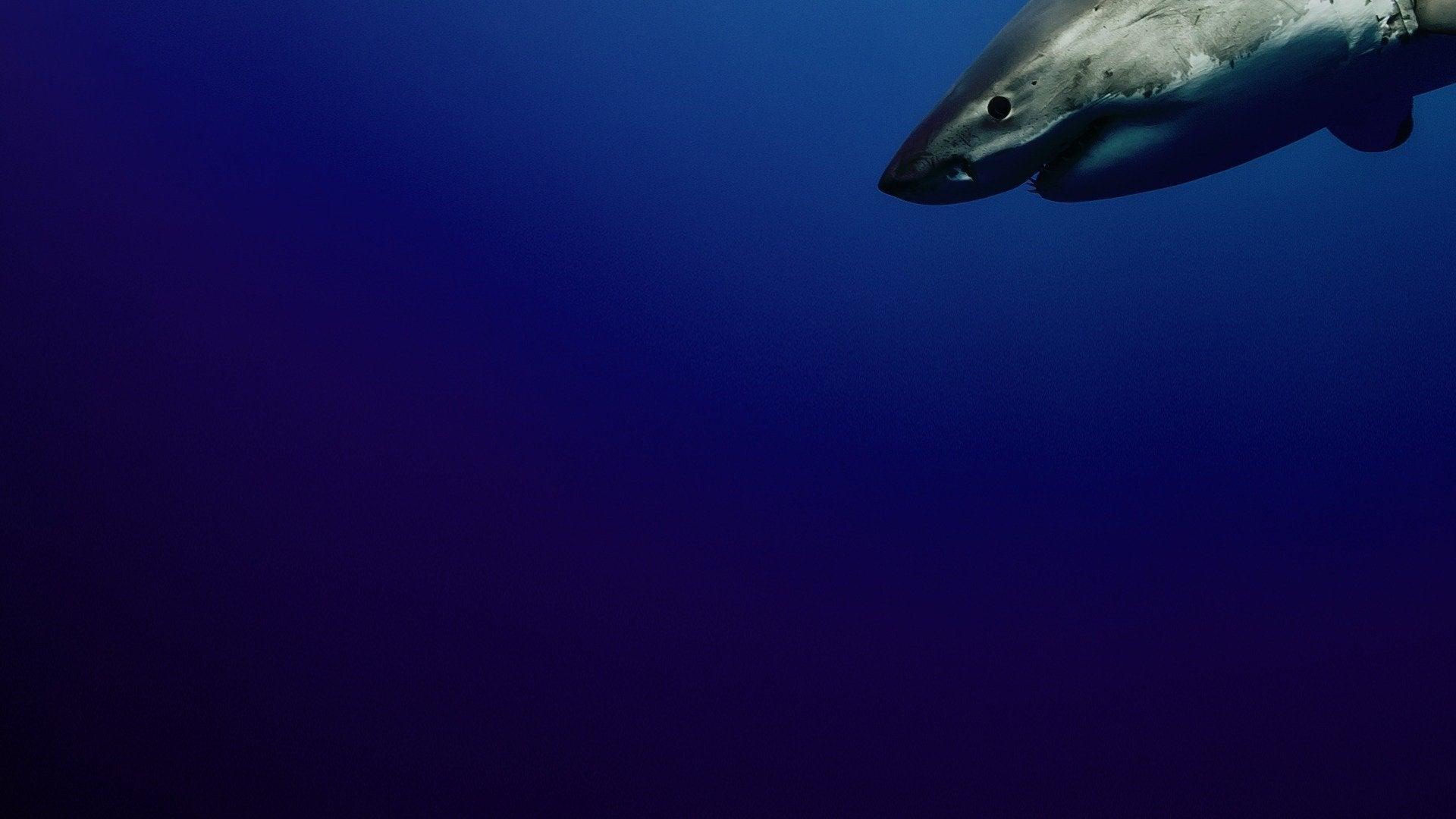 Cuba's Secret Shark Lair: Sharkopedia Edition
