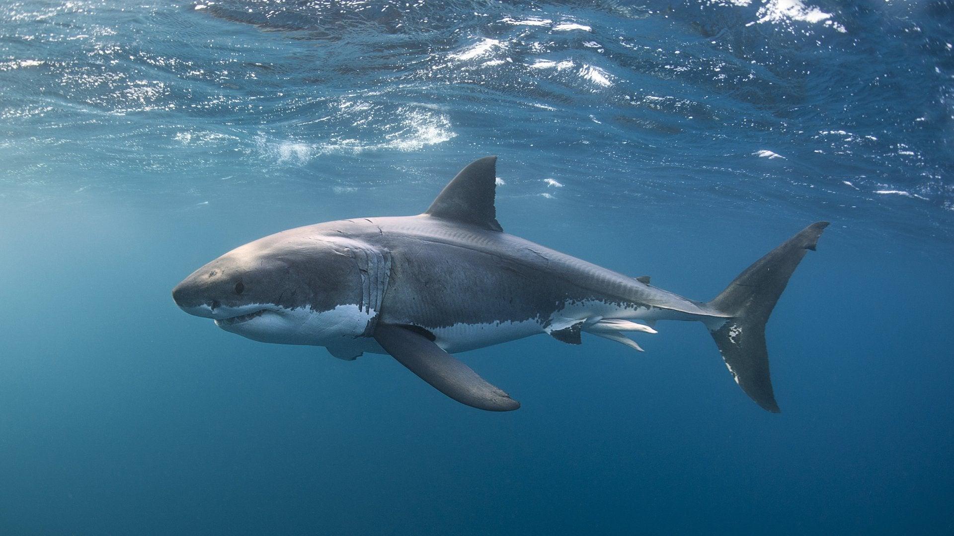 Shaq Does Shark Week: Sharkopedia Edition
