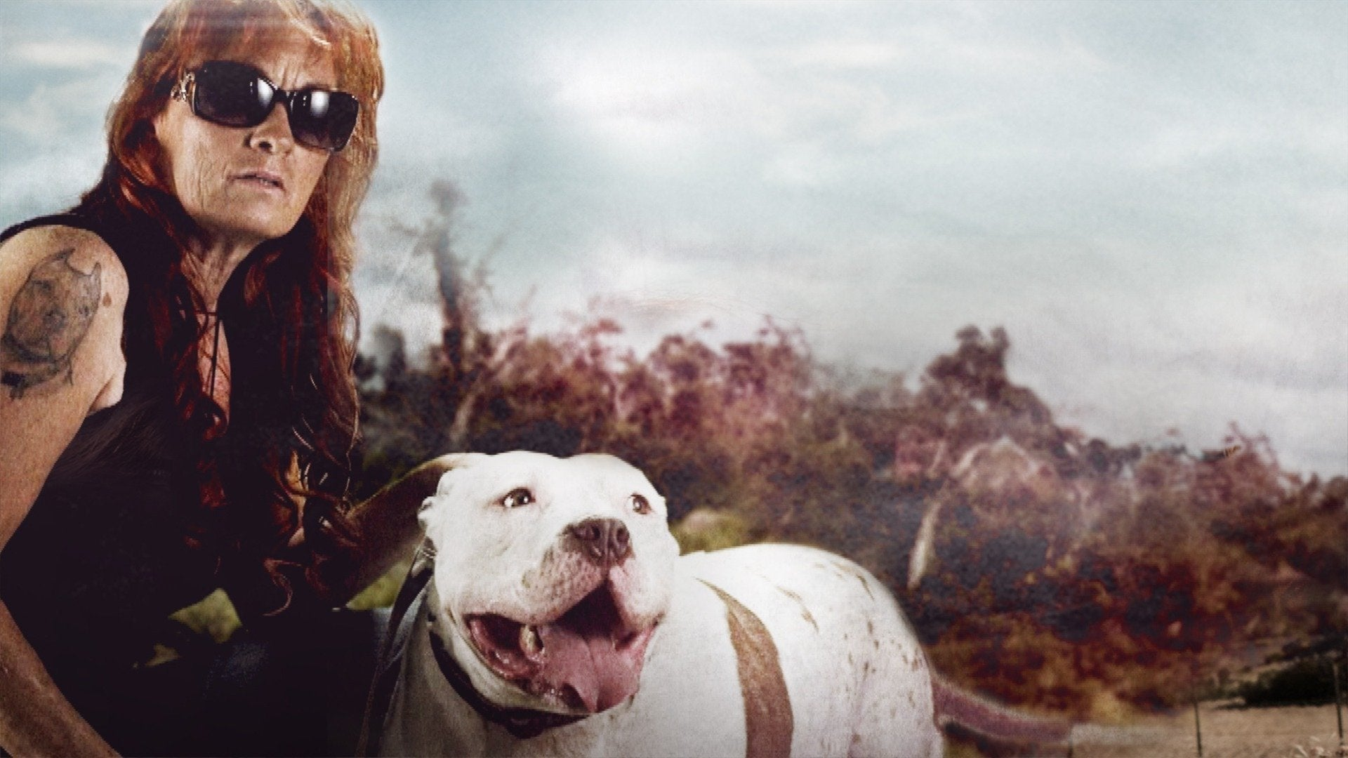 Pit Bulls & Parolees: Tias Most Memorable: Adoptions