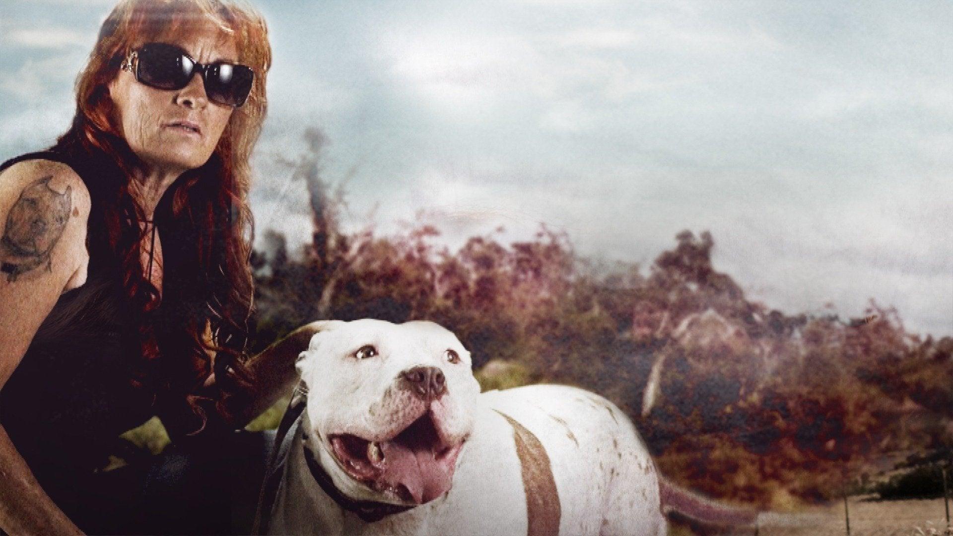 Pit Bulls & Parolees: Tia's Most Memorable: Miracle Dogs