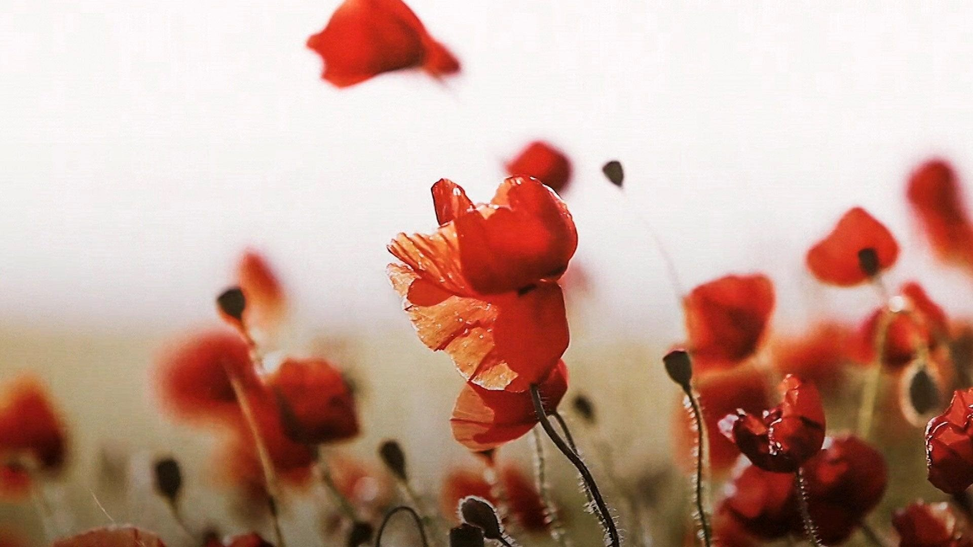 WWI Centenary: Remembering the Armistice