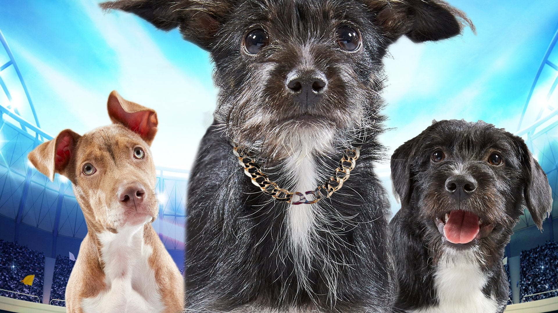 Puppy Bowl XV: Sneak Peeks