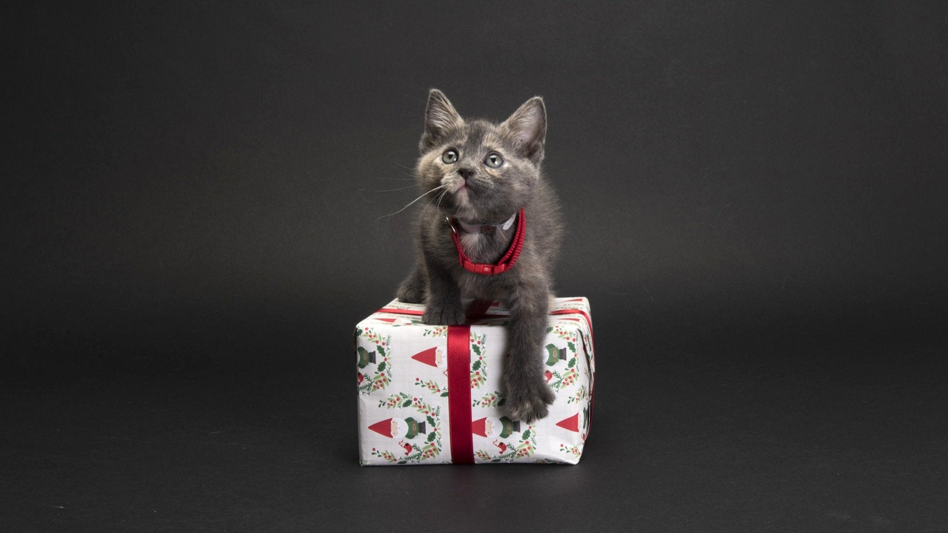 A Kitten Christmas: Adoption Ever After