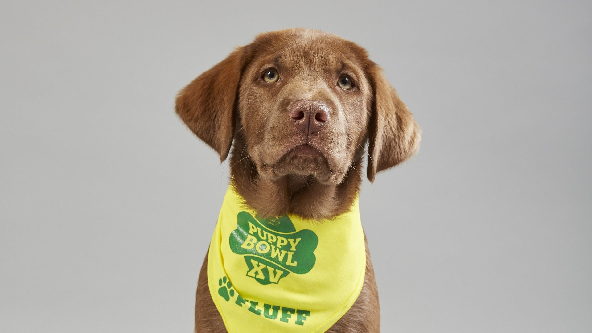 Puppy Bowl Presents: The Dog Bowl II