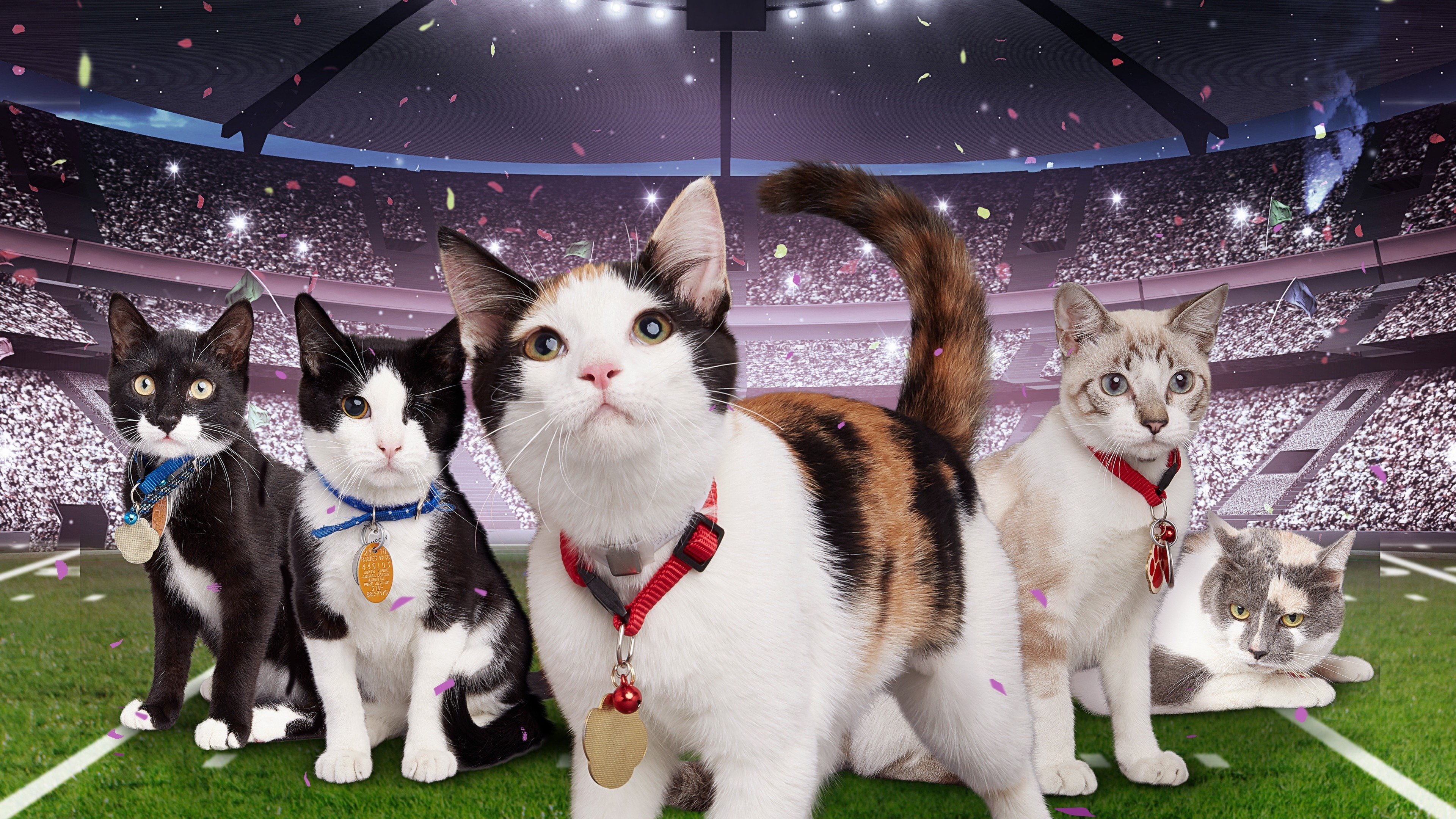 Hallmark Channel's 1st Annual Cat Bowl