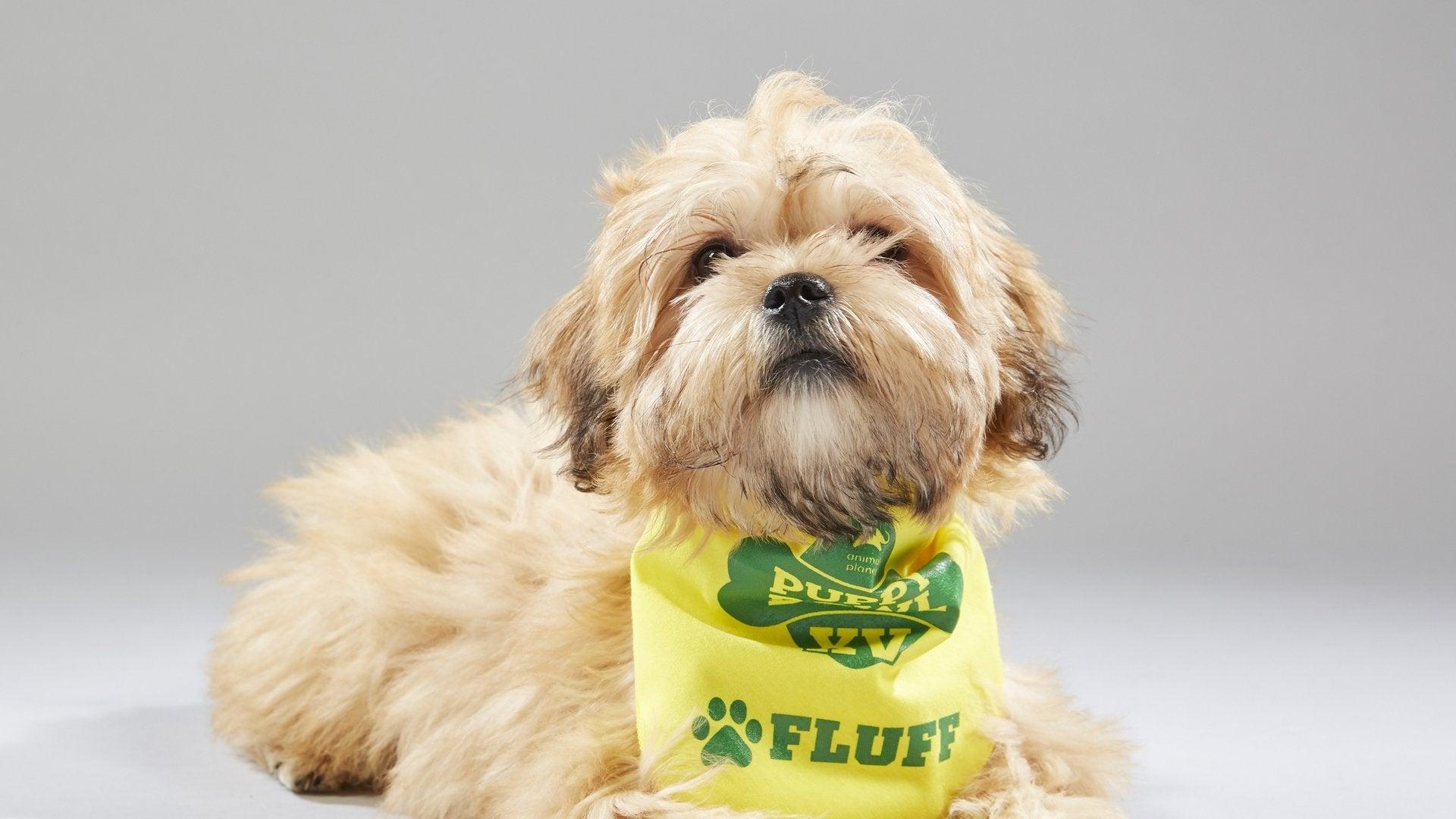 Puppy Bowl XV Presents: America's Cutest