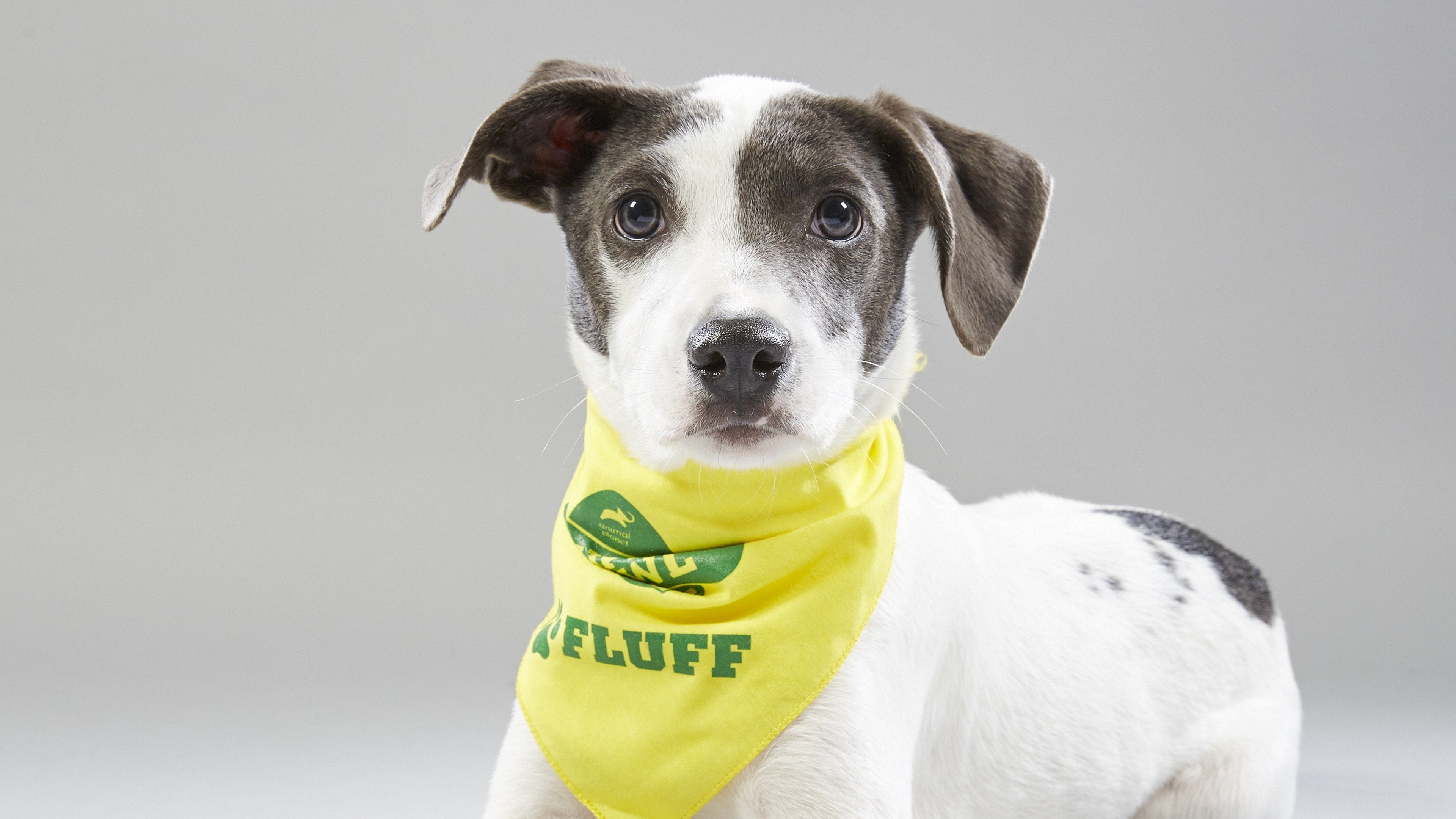 Puppy Bowl XV Presents: The Dog Bowl II