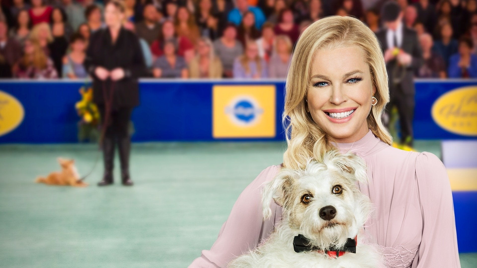 2019 American Rescue Dog Show