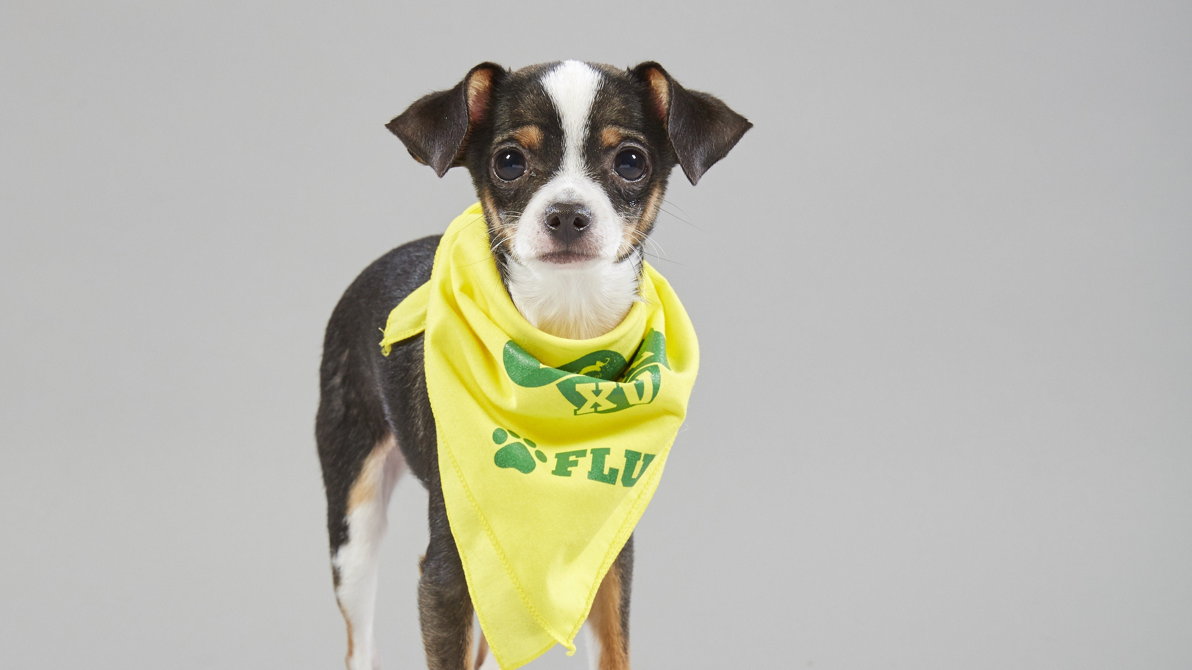 Puppy Bowl XV Presents: Too Cute! For Puppy Bowl