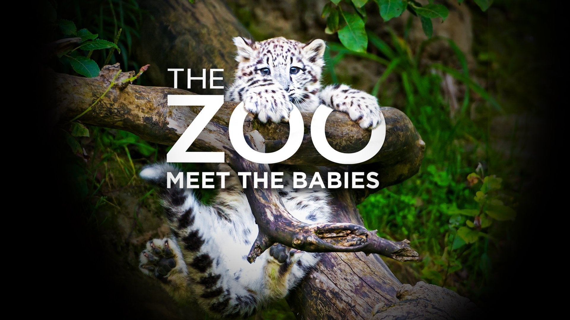 The Zoo: Meet the Babies