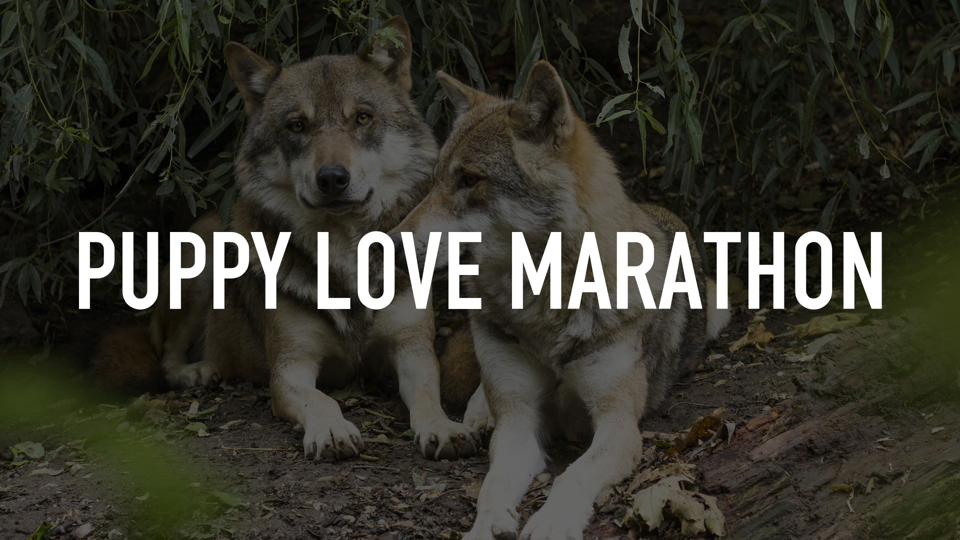 Puppy Love Marathon