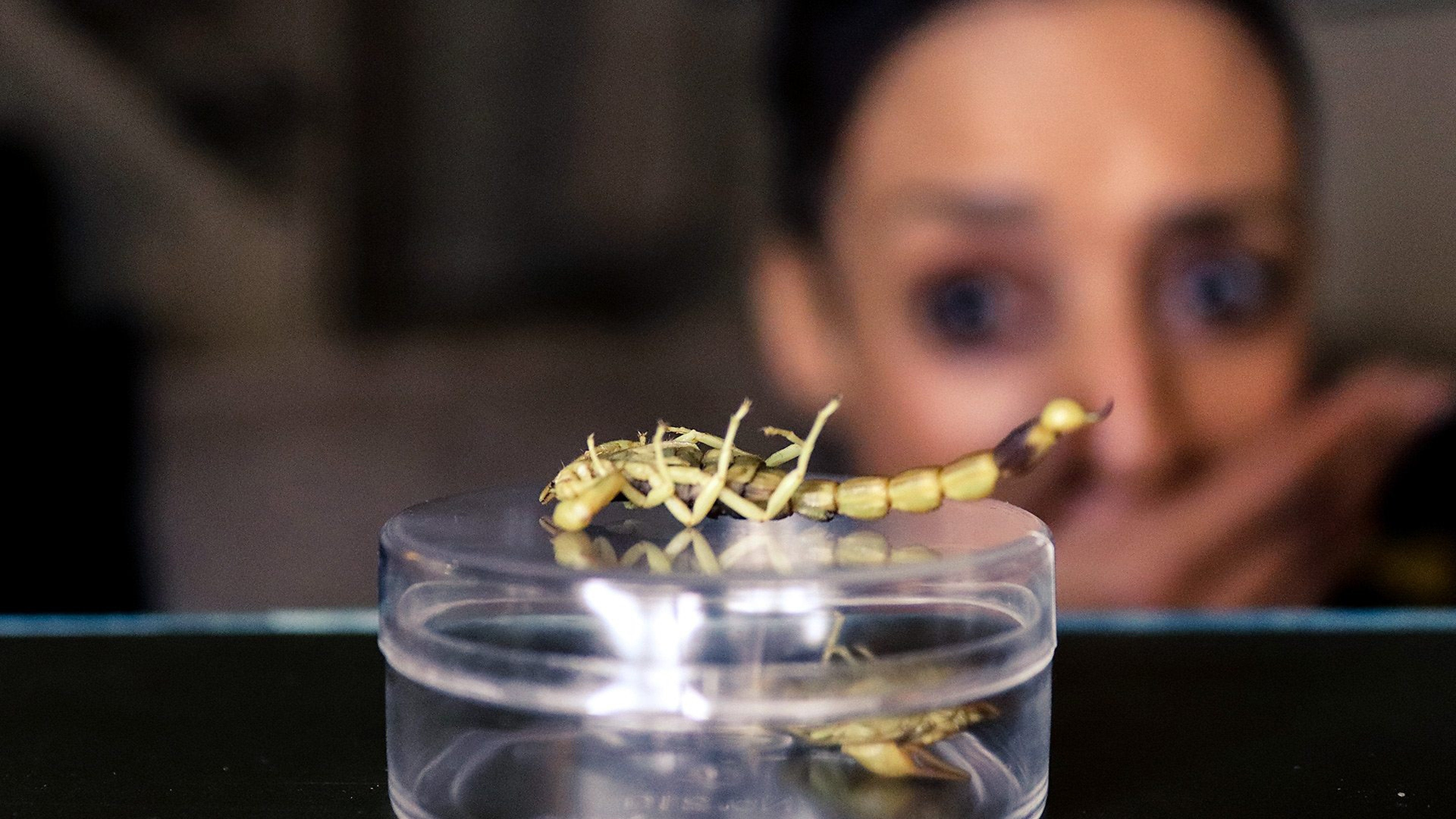 Grubs Up: Would You Eat Insects to Save the Planet?