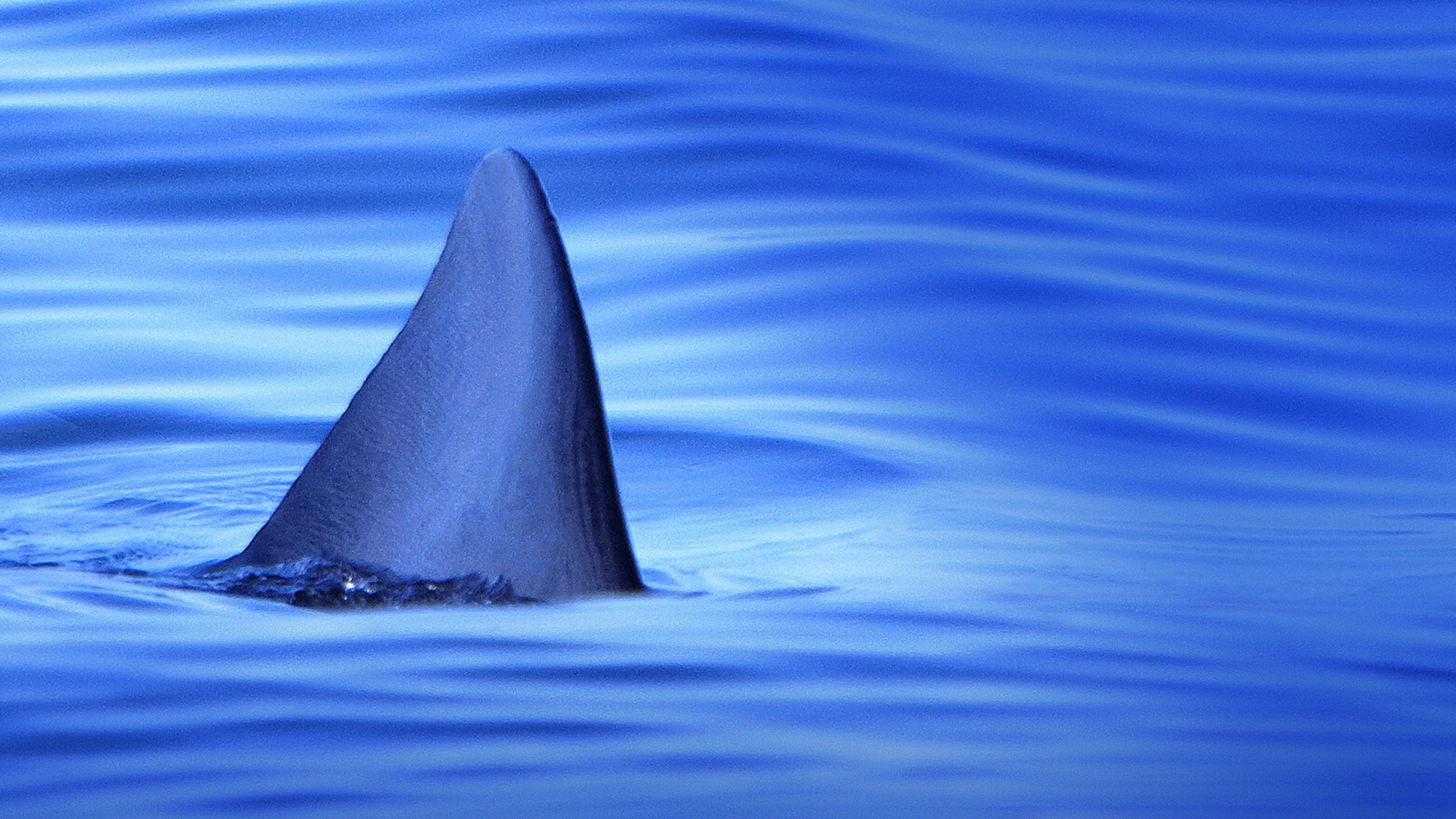 Sharks of the Badlands