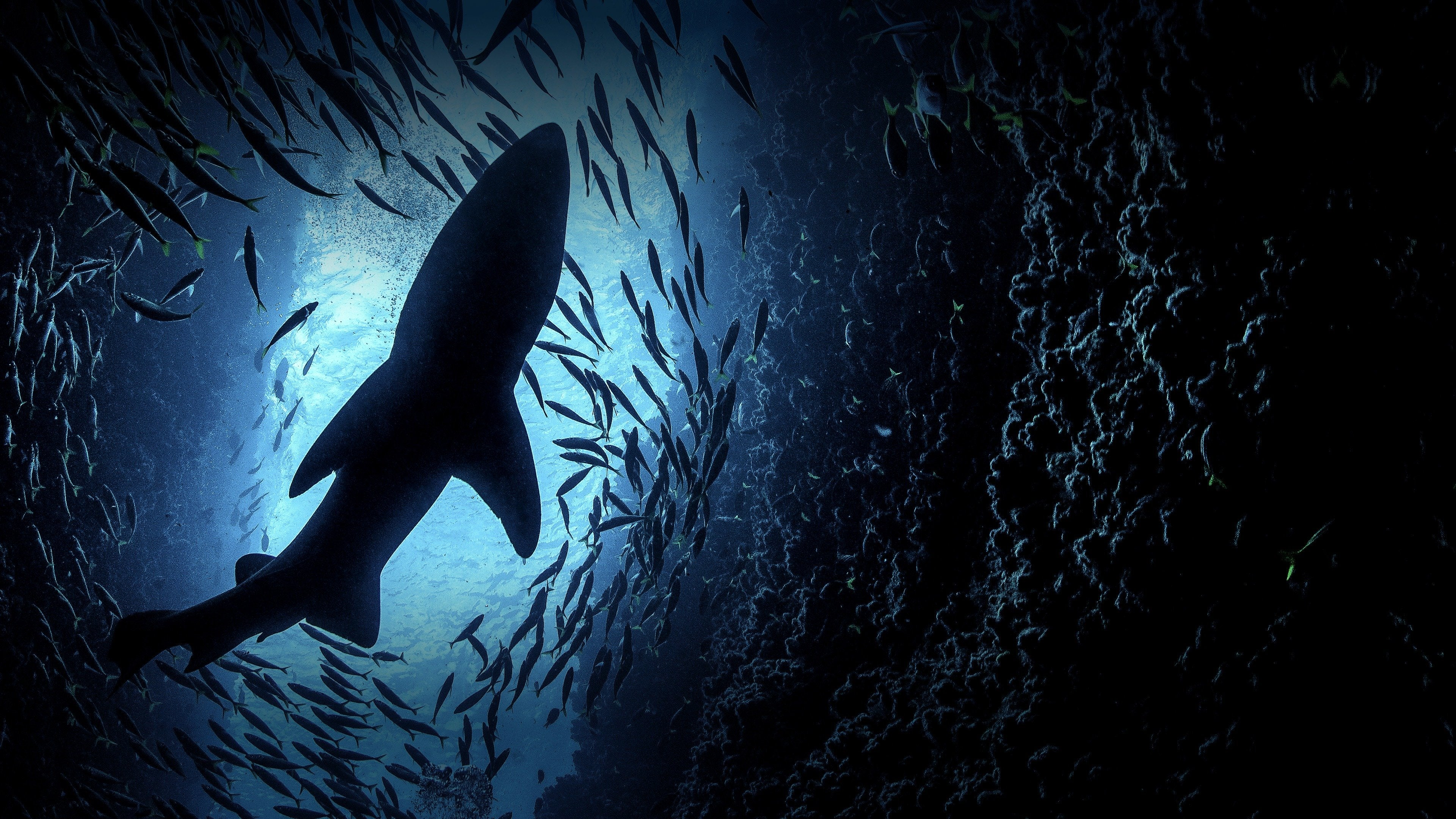 Shark Week Immersion