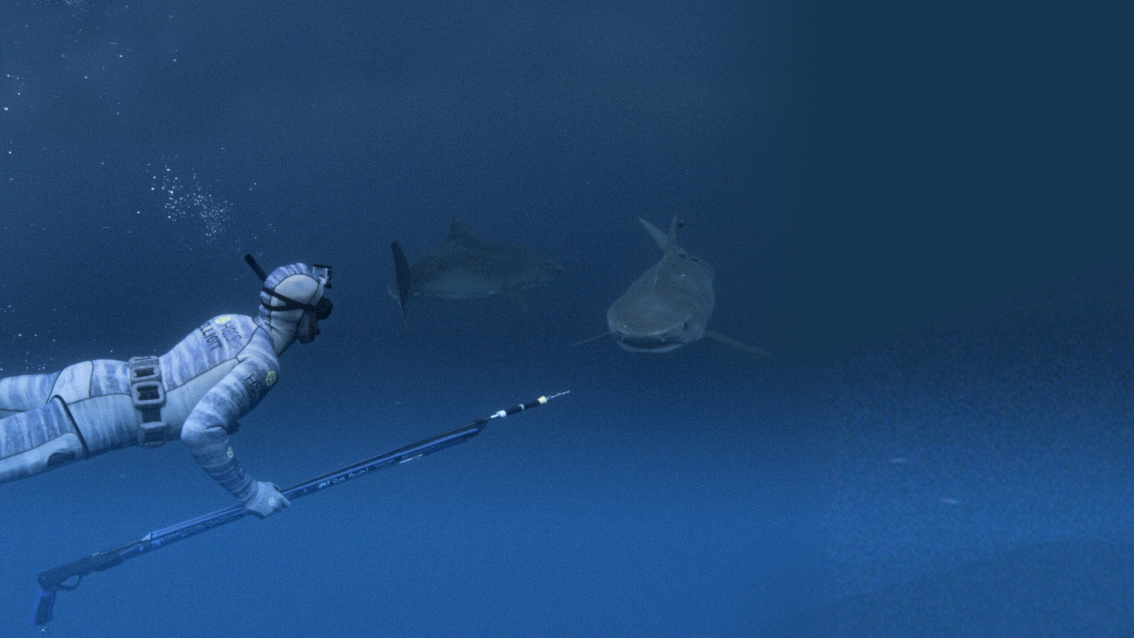 The Sharks of Headstone Hell: Sharkmania