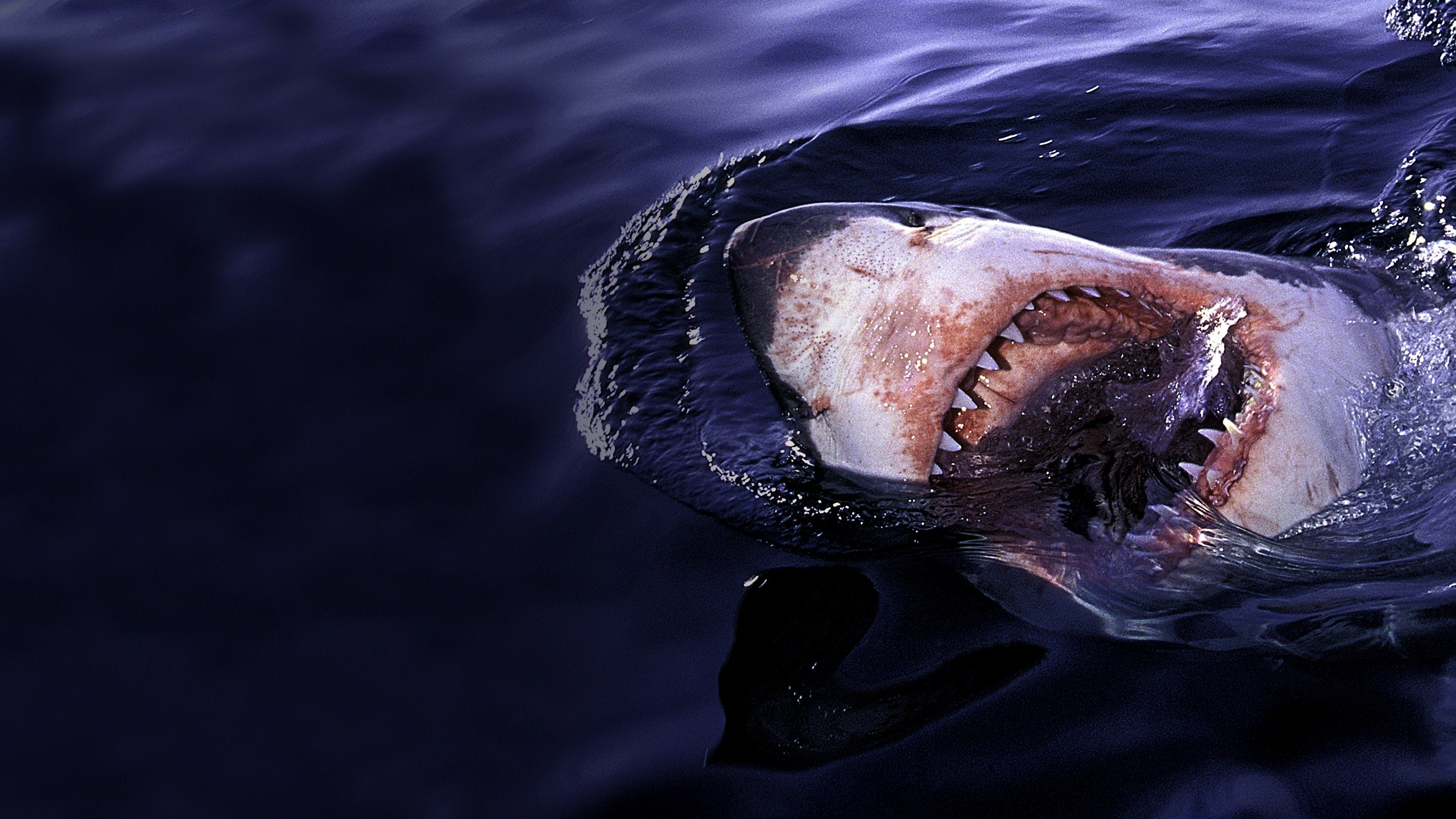 Laws of Jaws: Dangerous Waters: Sharkmania