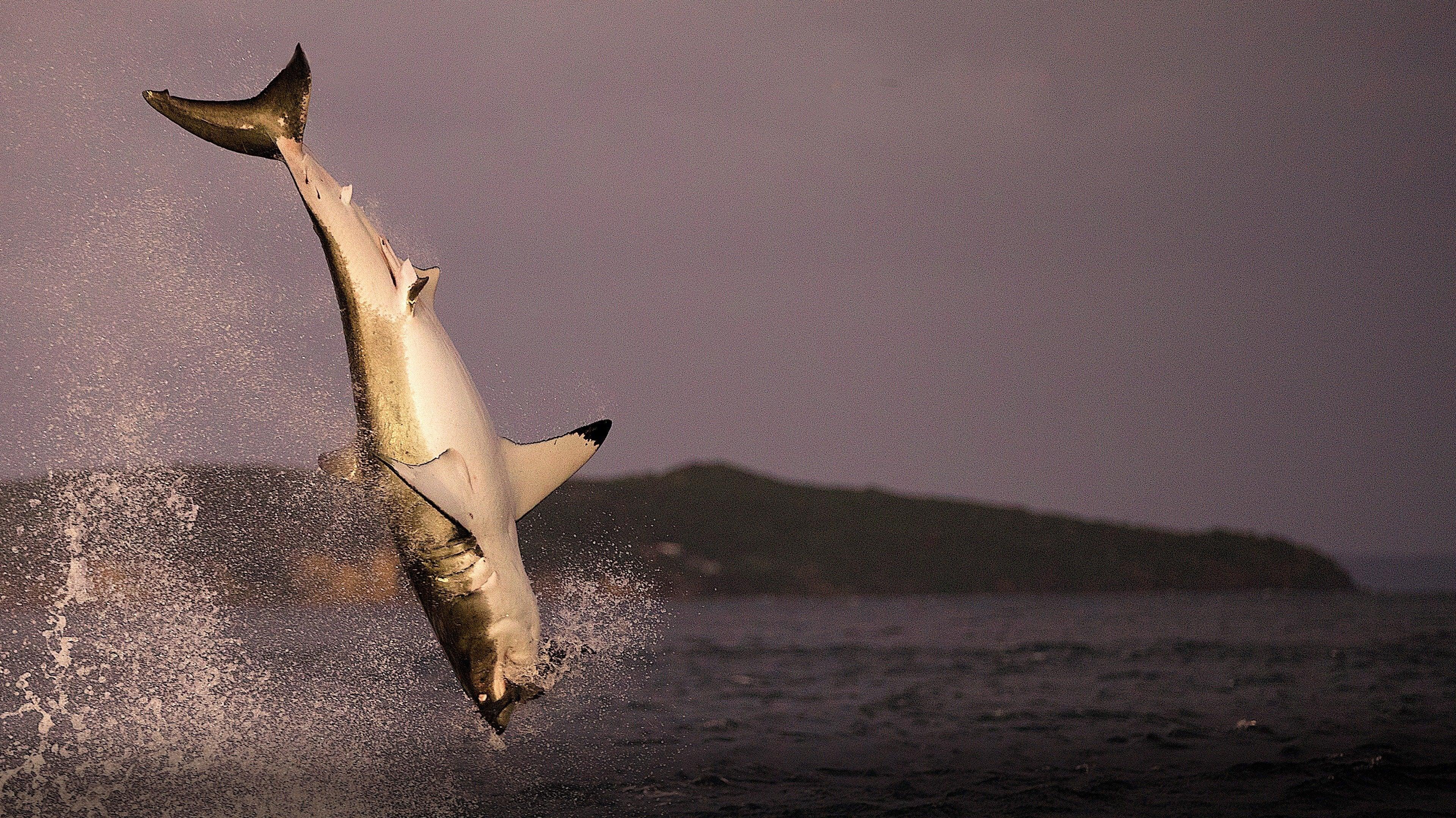 Air Jaws Strikes Back: Sharkmania