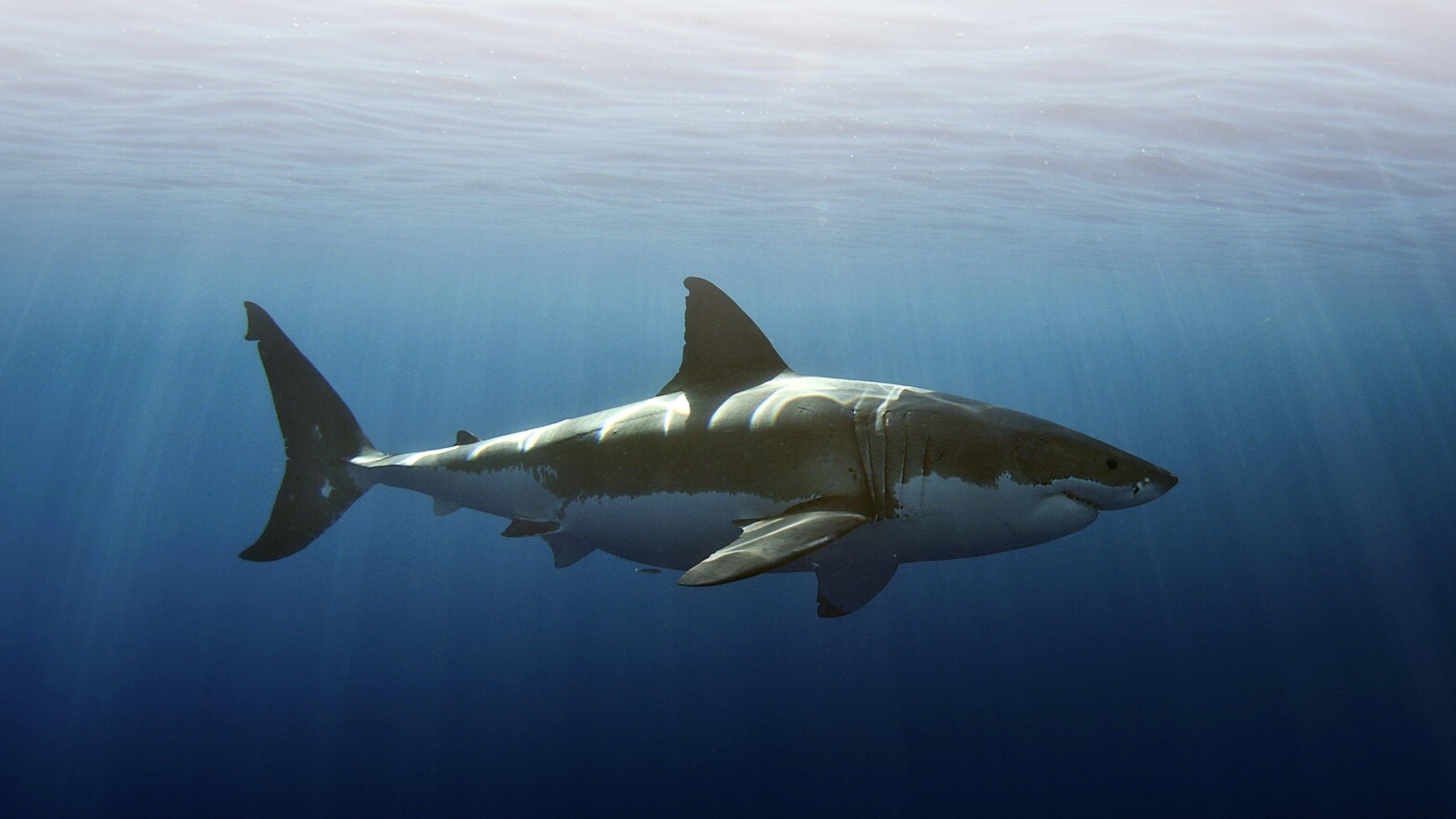 Legend of Deep Blue: Sharkmania