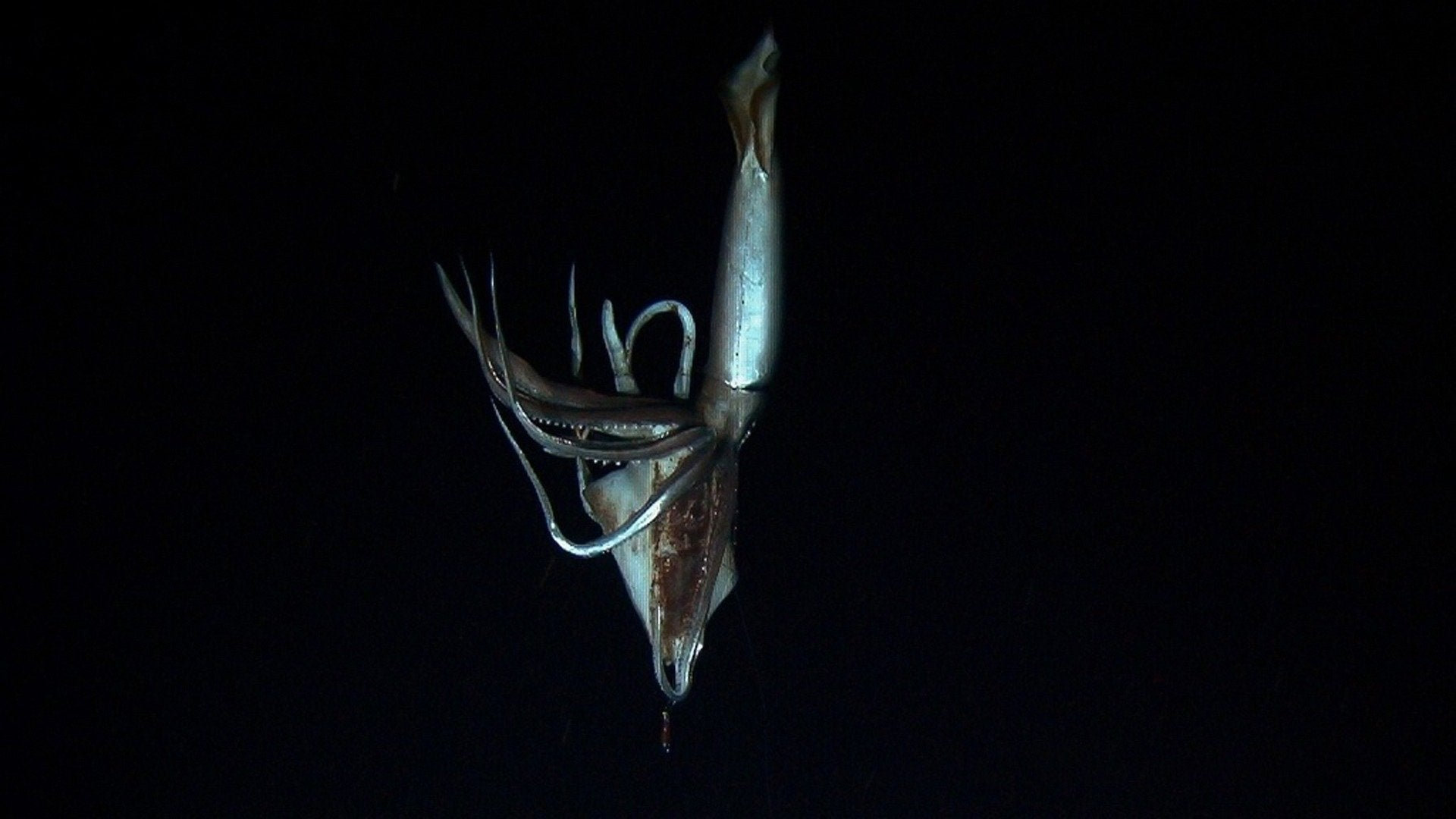 Monster Squid: Hunting a Killer - Terror in the Abyss