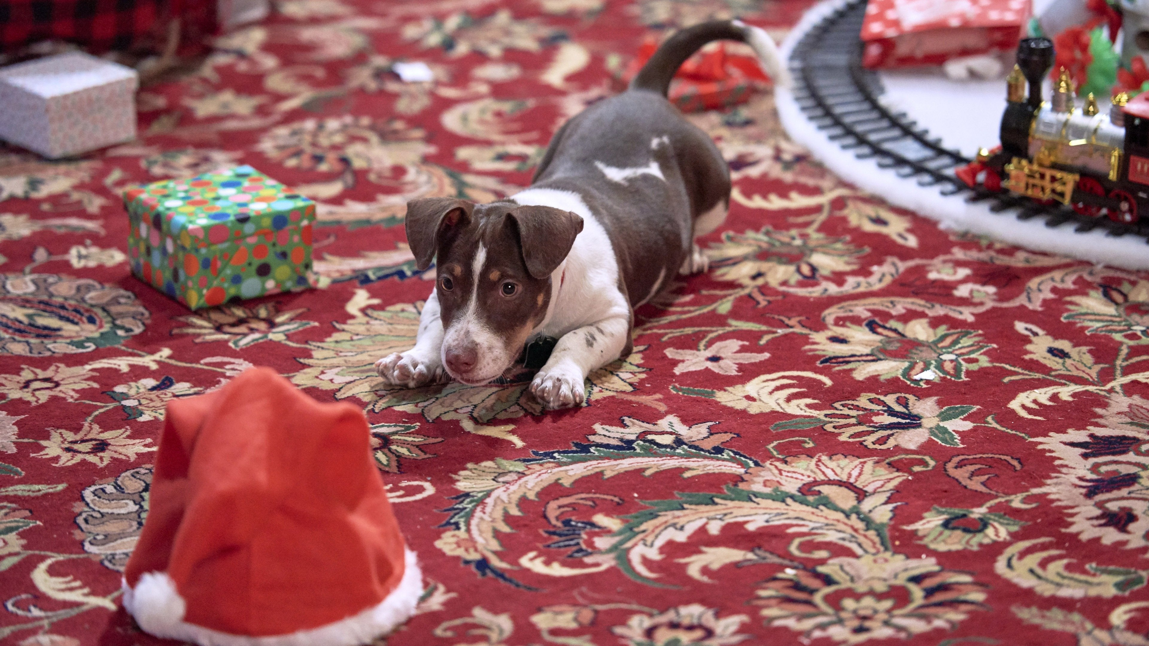 A Puppy Christmas