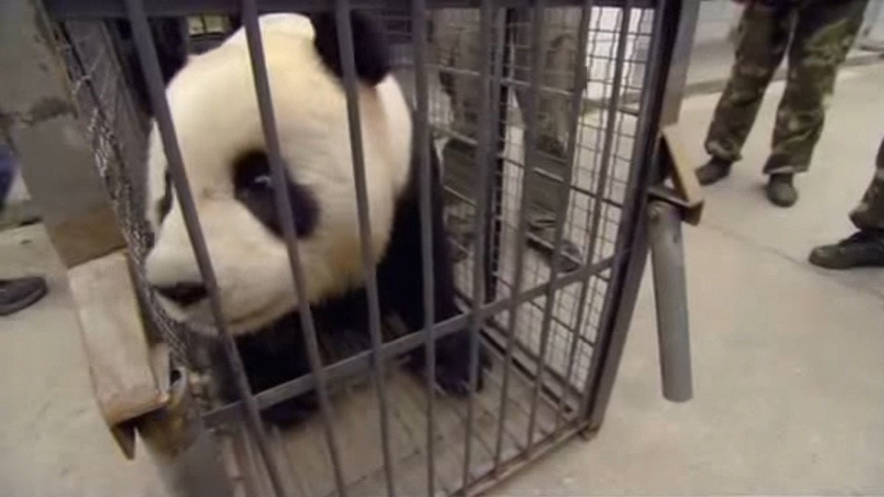 Earthquake: Panda Rescue