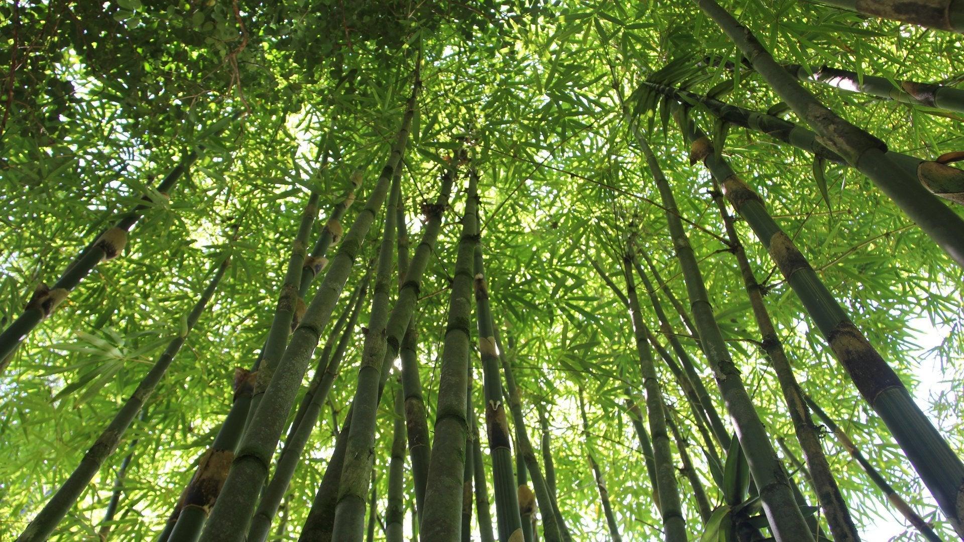 Jungle: Canopyworld