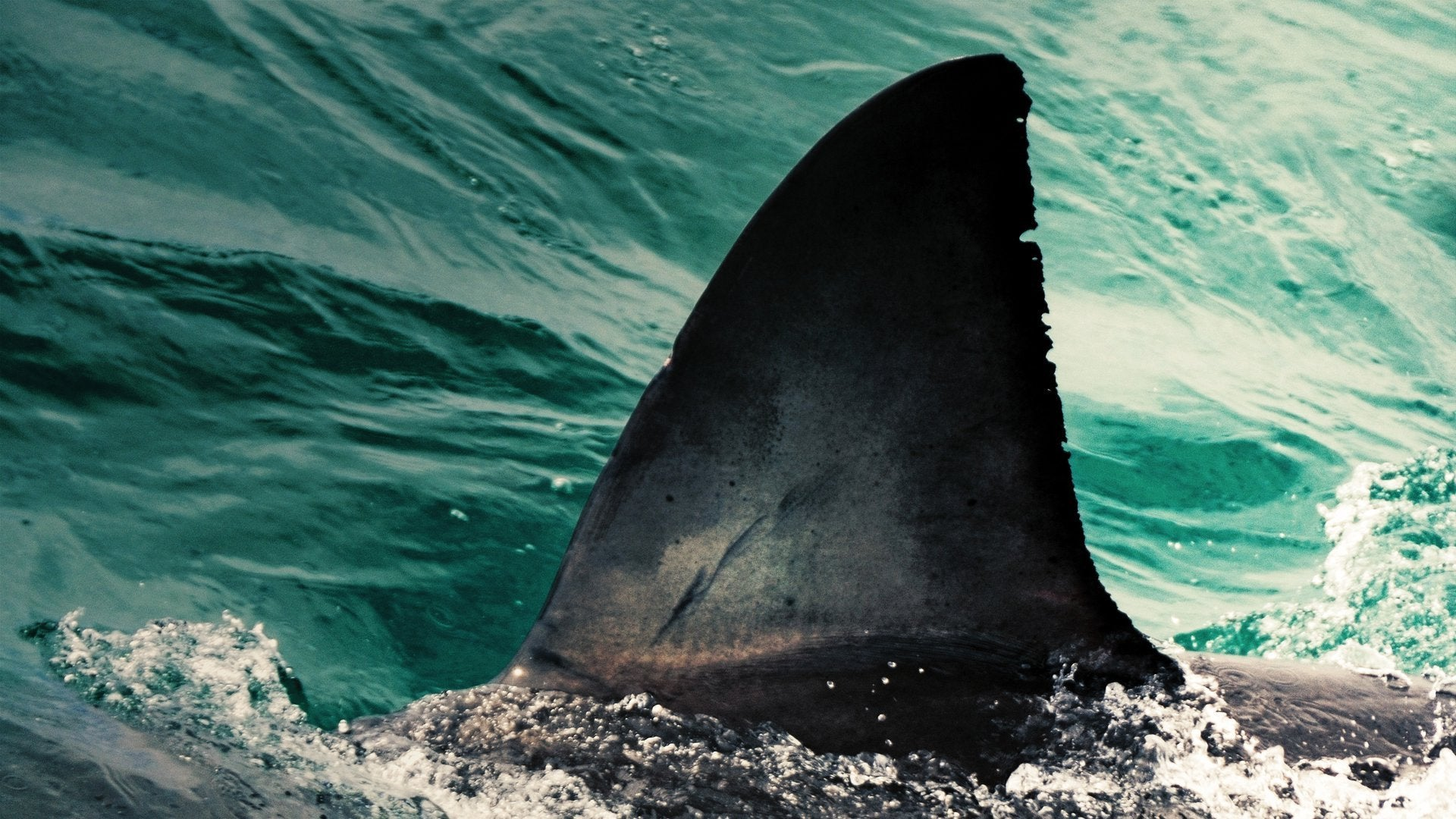 Shark Attack: A Boy's Fight to Survive