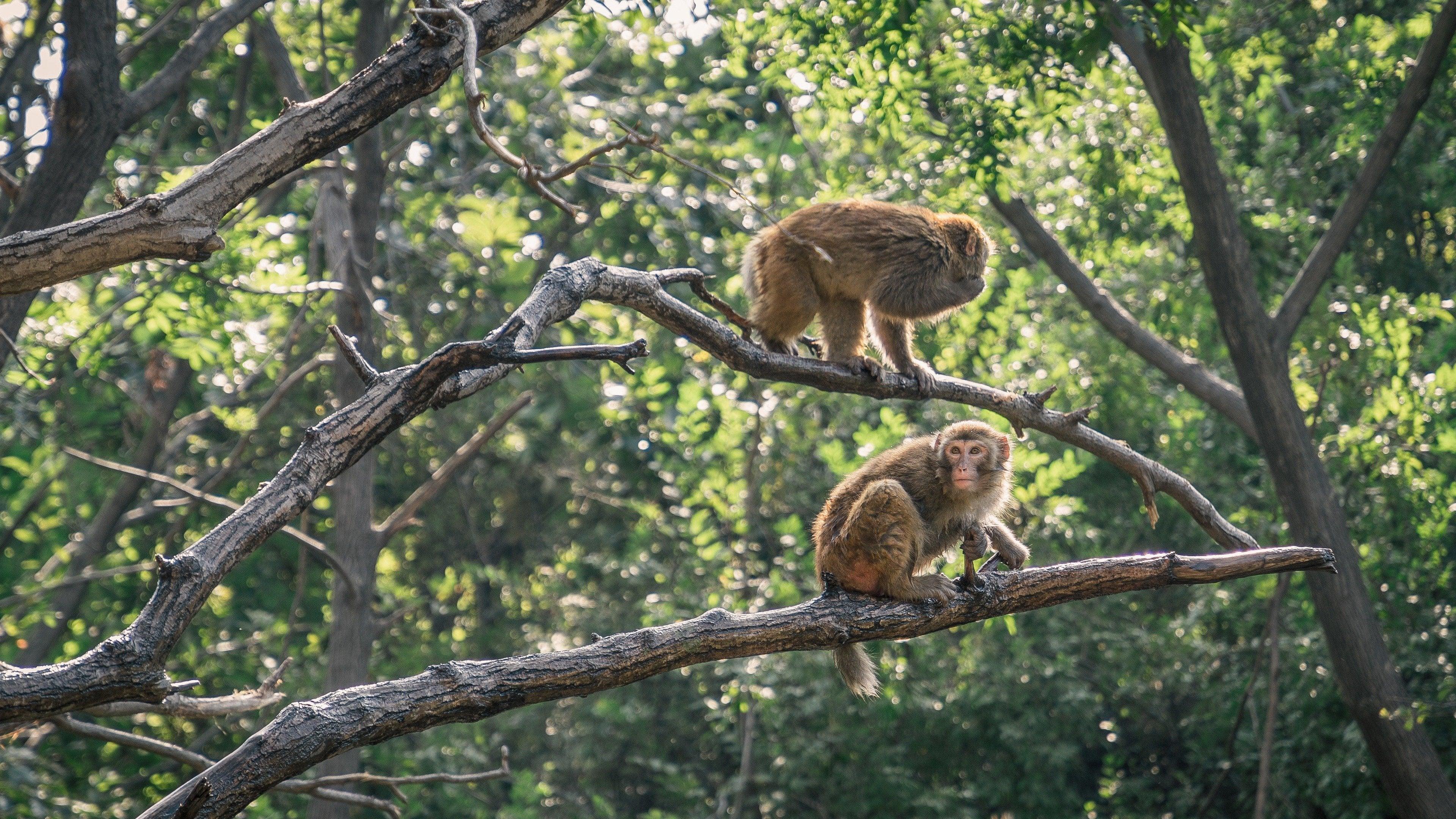 League of Monkeys