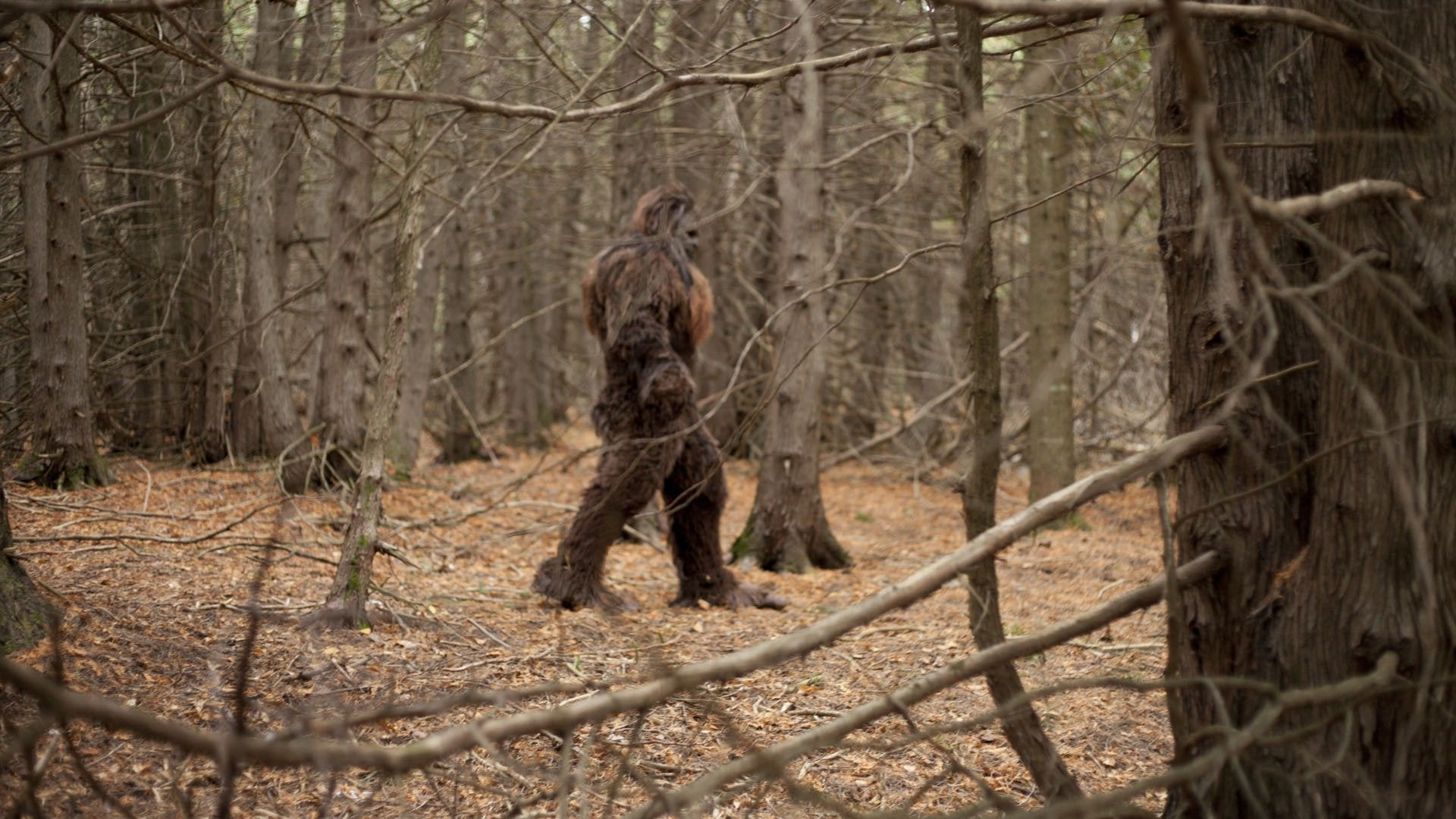 Bigfoot: The Definitive Guide