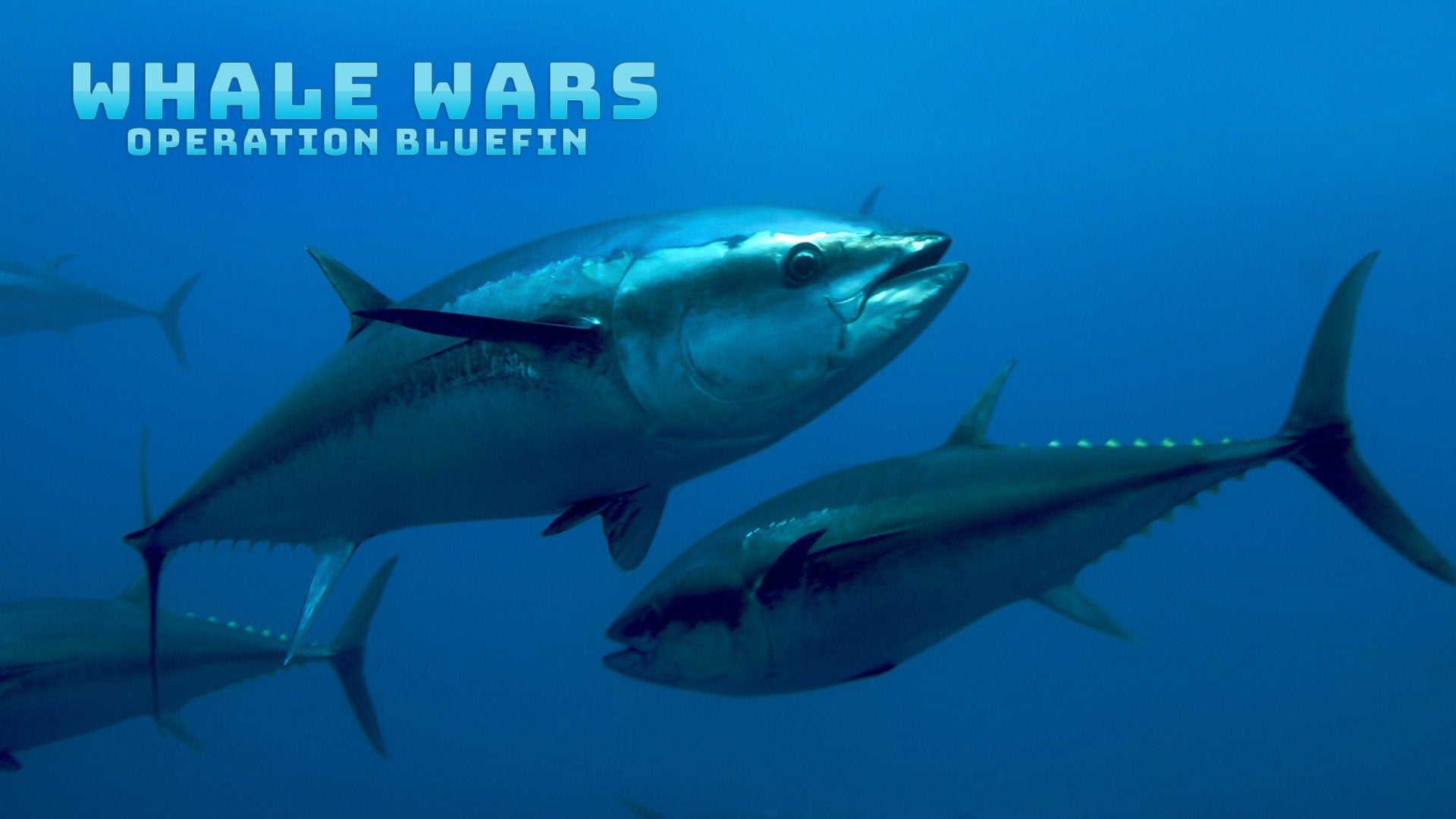 Whale Wars: Operation Bluefin