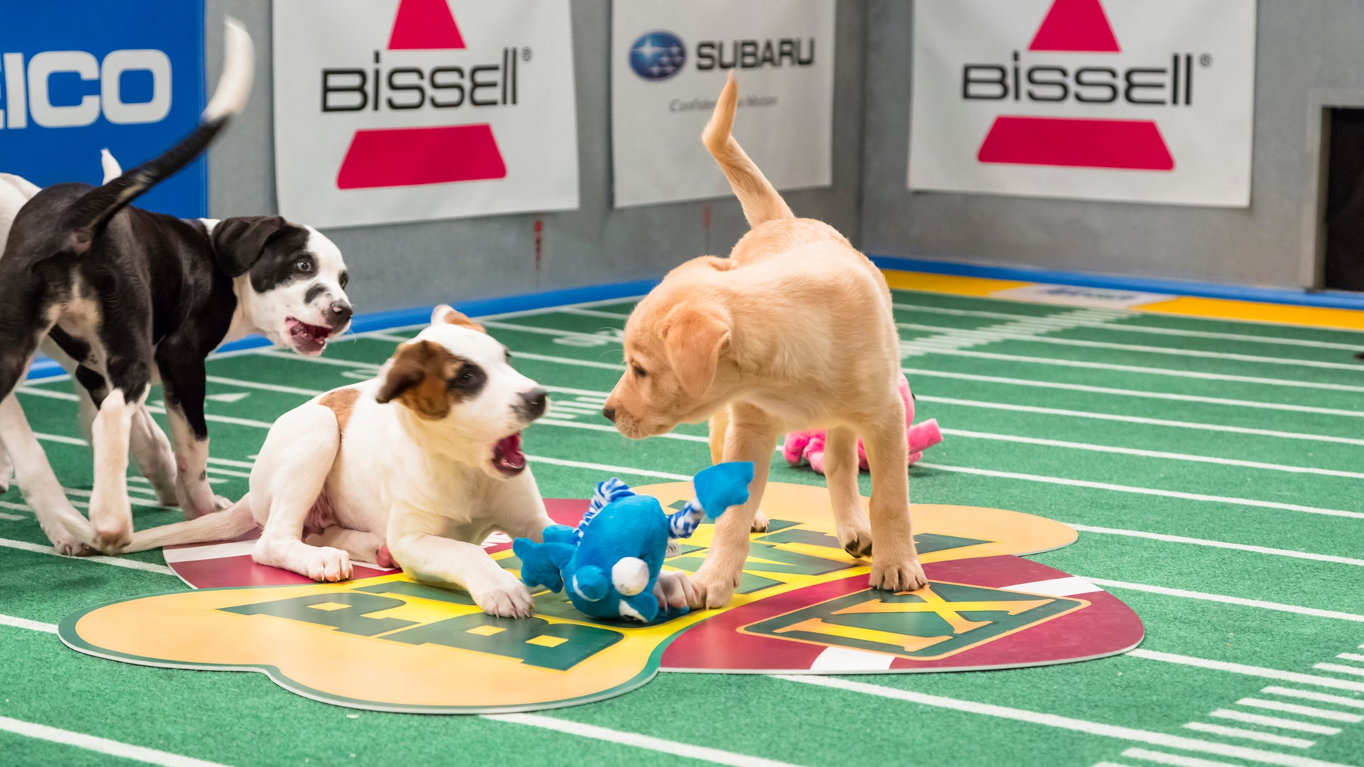 Puppy Bowl IX