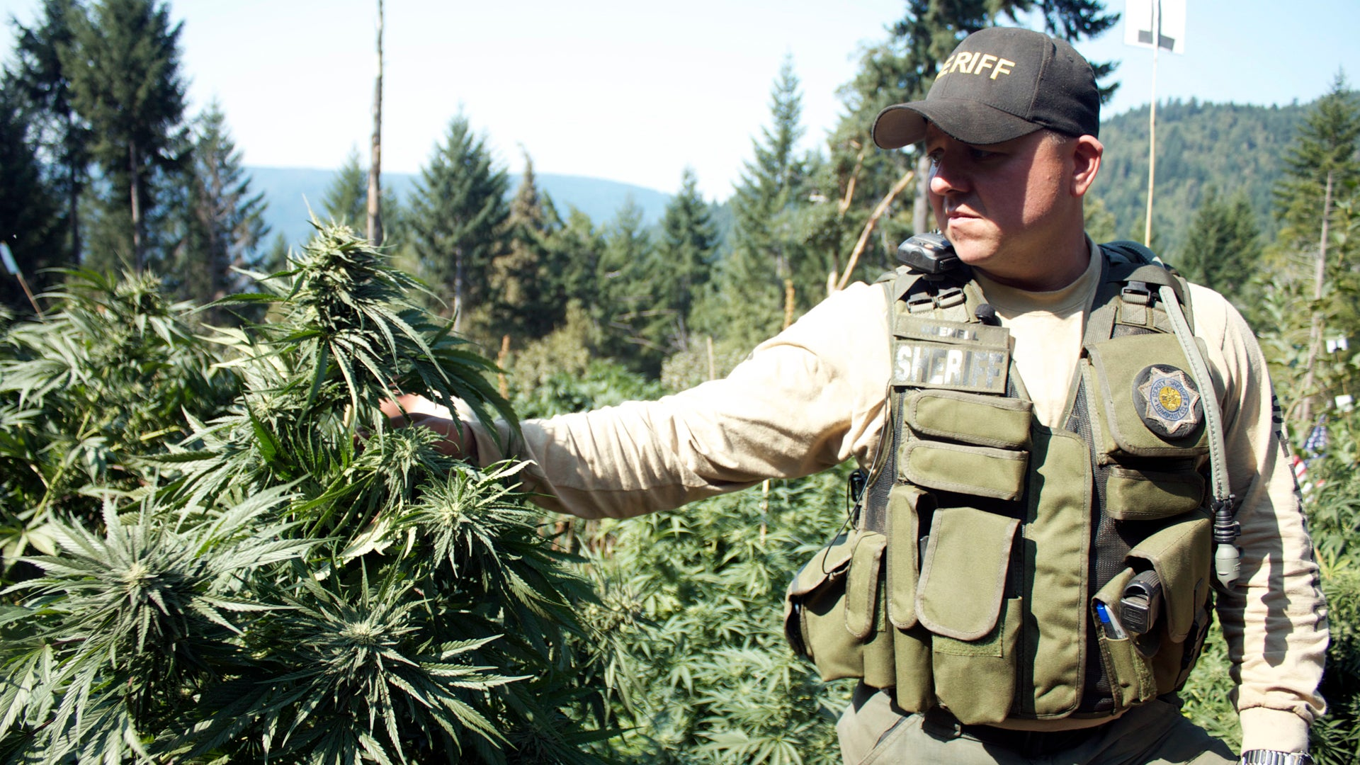 Pot Cops