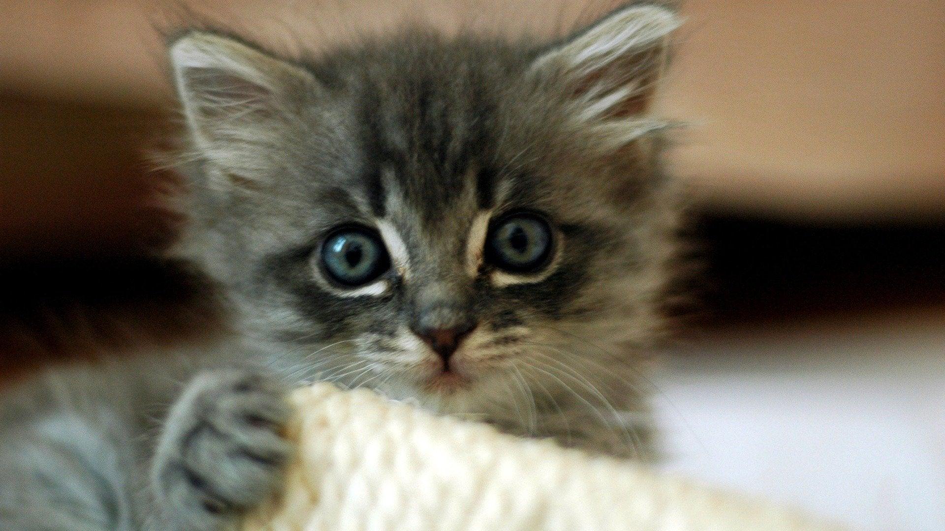 America's Cutest Cat